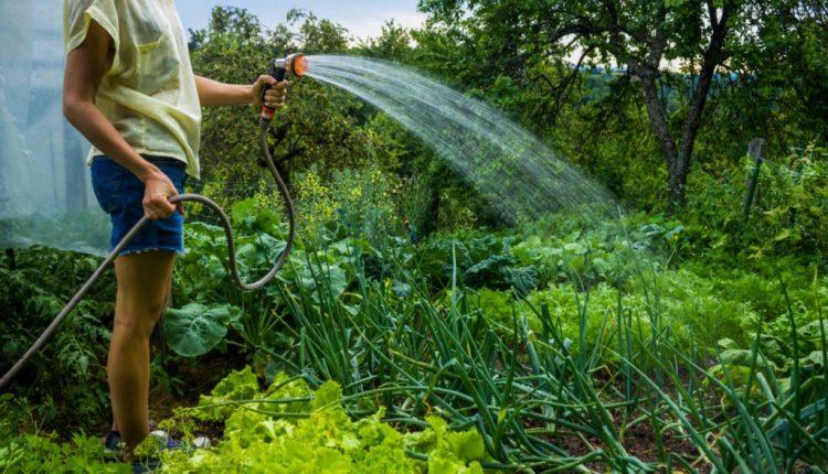 Au udat grădinile și acum riscă să rămână fără apă potabilă
